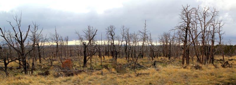 Foresta bruciata nel lato rurale del paese in U.S.A. fotografie stock