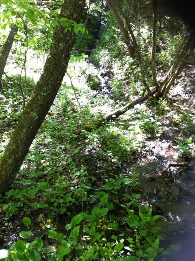 Foresta capricciosa immagine stock