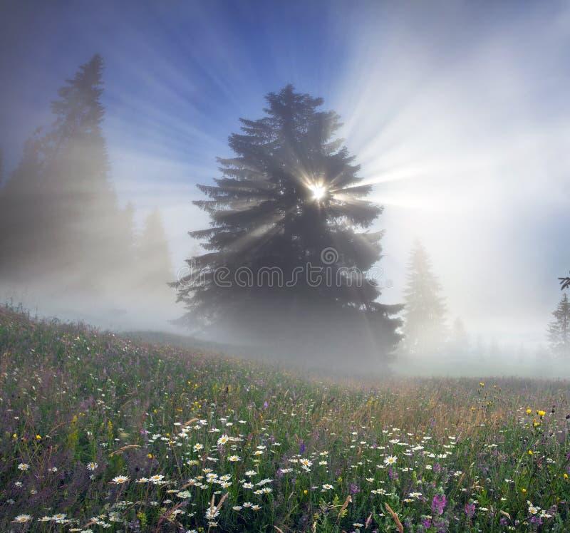 Foresta carpatica magica immagini stock