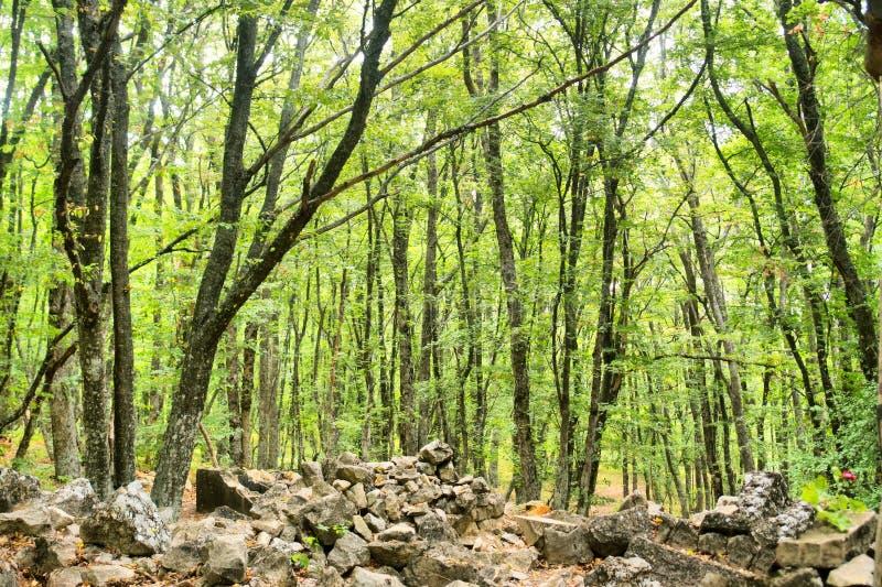Foresta che cresce sulle rovine fotografie stock libere da diritti