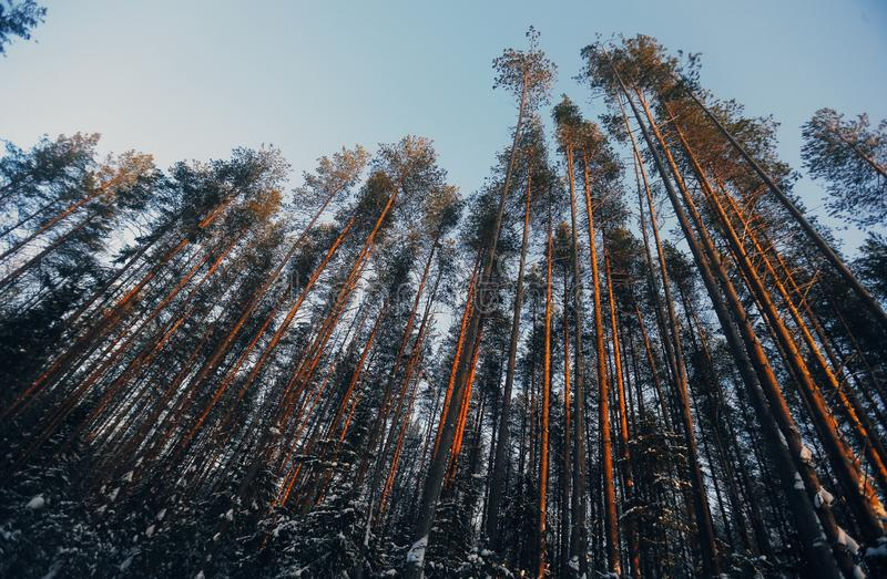 Foresta a cielo fotografia stock
