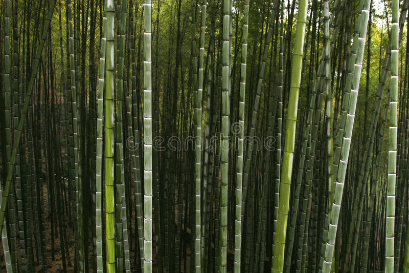 Foresta cinese della montagna immagine stock libera da diritti