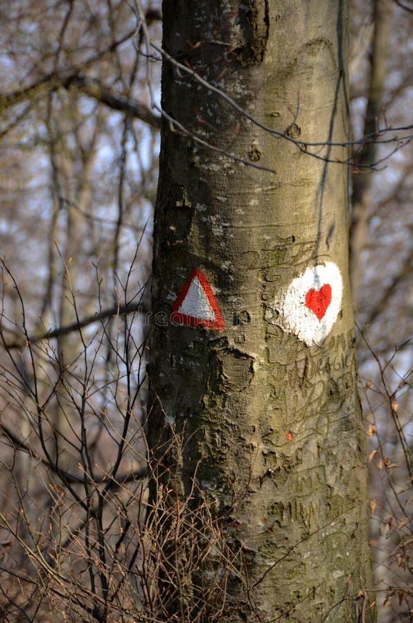 Foresta con gli alberi ed il cuore rosso dipinti sull'albero fotografia stock