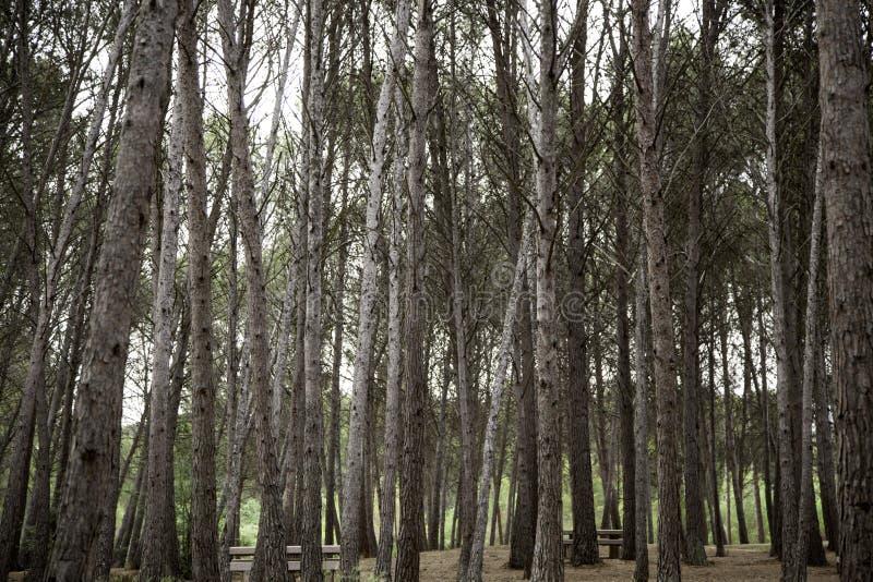 Foresta con gli alberi fotografia stock