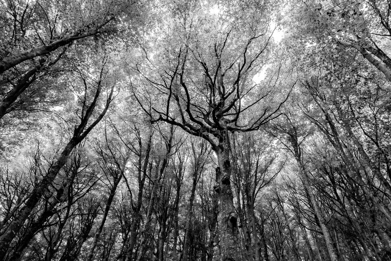 Foresta con gli alberi molto espressivi fotografie stock