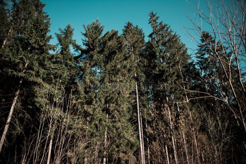 Foresta con il cielo fotografie stock