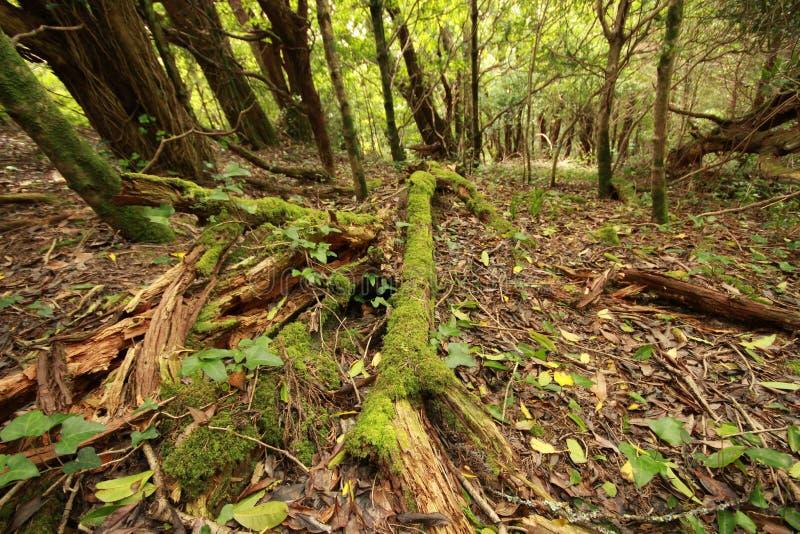 Foresta con l'albero del muschio fotografie stock