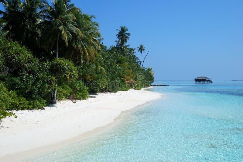 Foresta con le palme su una riva vicino alla spiaggia con una casa nella distanza immagini stock