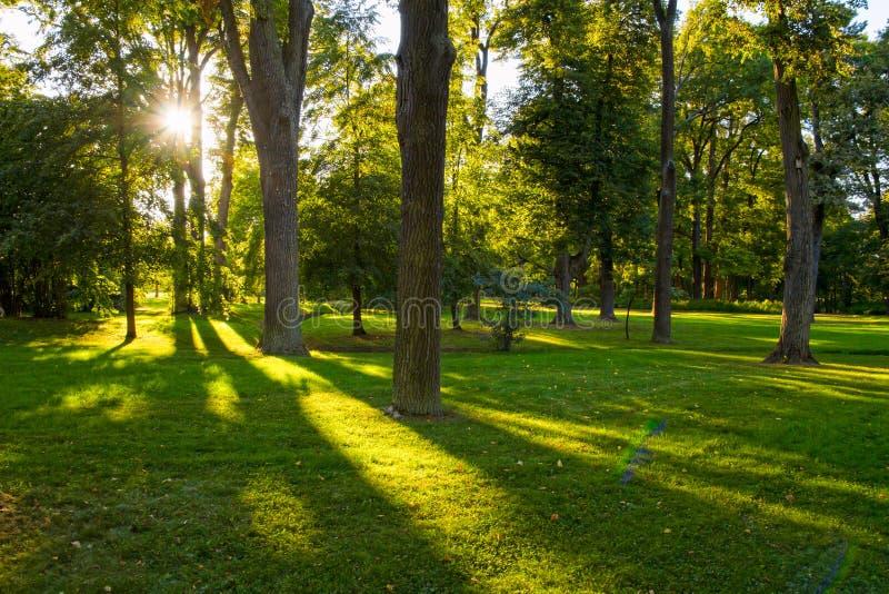 Foresta con luce solare ed ombre al tramonto fotografia stock