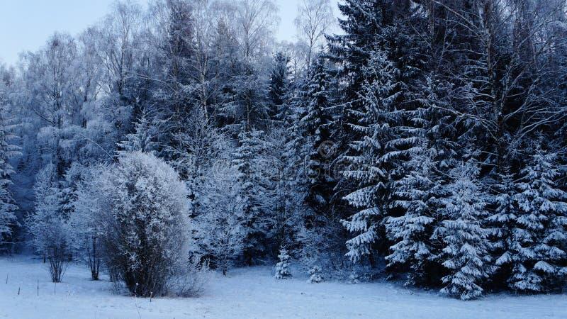 Foresta congelata fotografia stock