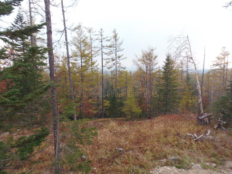 Foresta d'autunno immagini stock