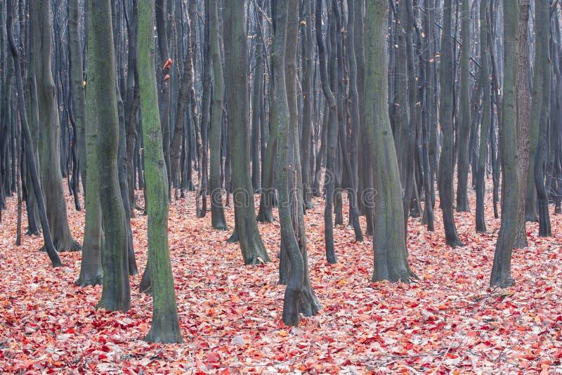 Foresta decidua di autunno fotografia stock