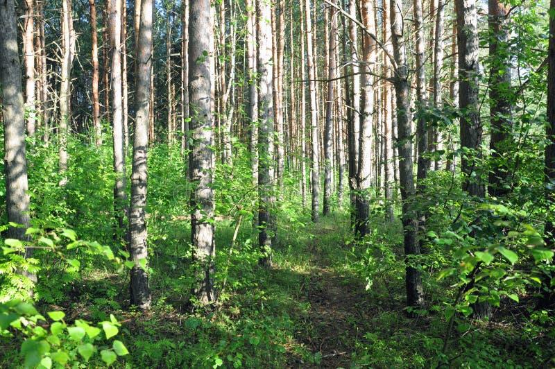 Foresta decidua mista consacrata da luce solare dopo pioggia immagini stock
