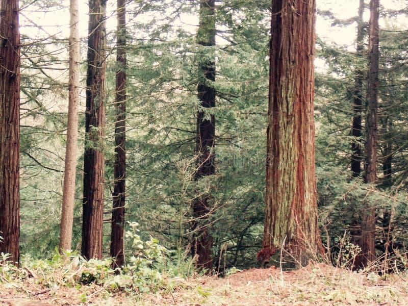 Foresta degli alberi fotografie stock