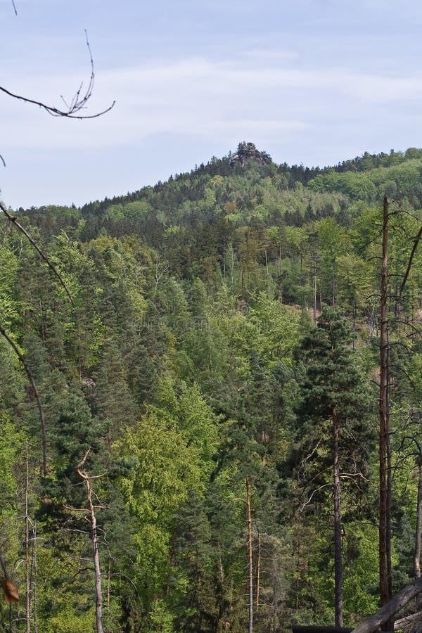 Foresta degli alberi verdi alti fotografia stock