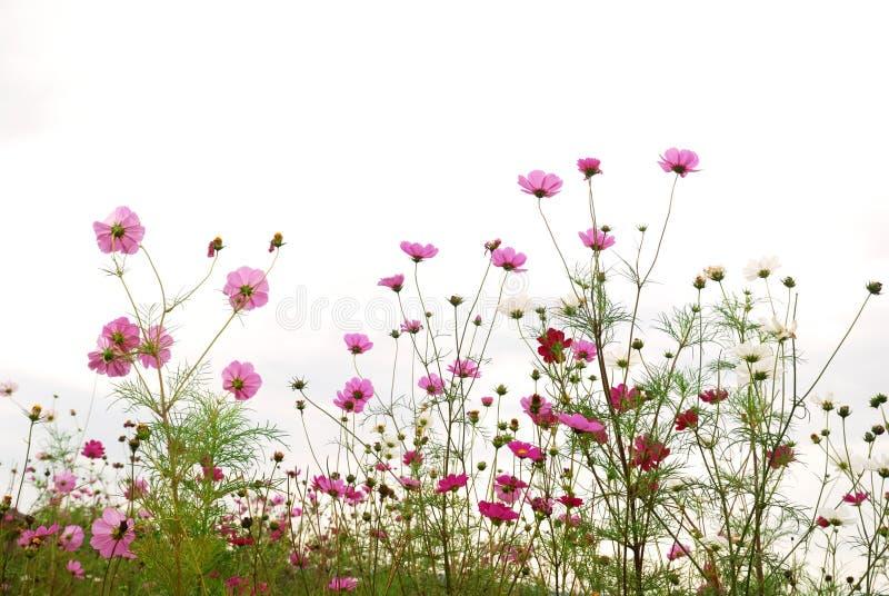 Foresta dei fiori immagini stock
