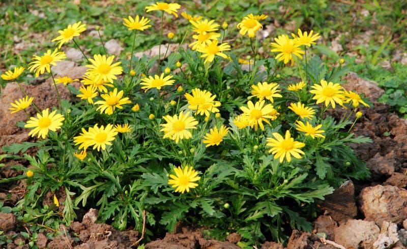 Foresta dei fiori fotografie stock