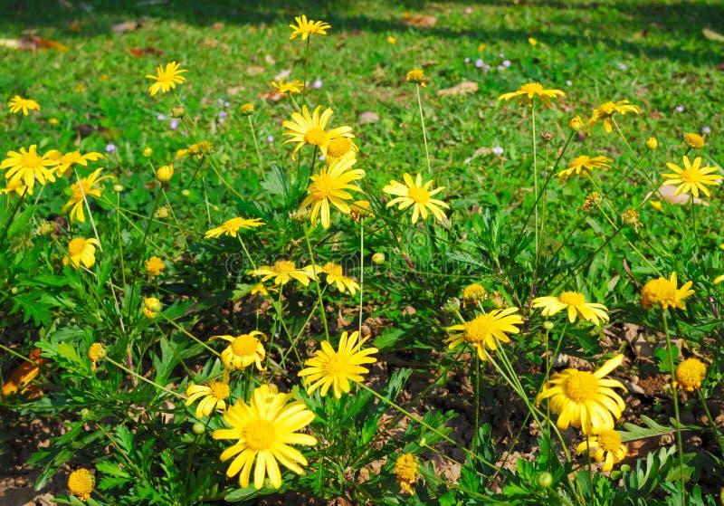 Foresta dei fiori fotografia stock