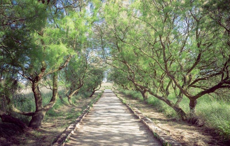 Foresta dei tarayes fotografia stock libera da diritti