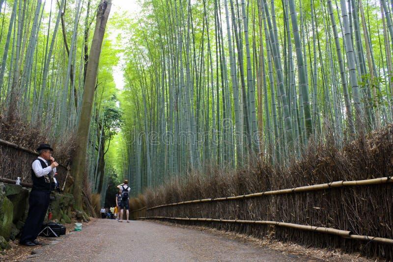 Foresta del bambù di Arashiyama fotografia stock