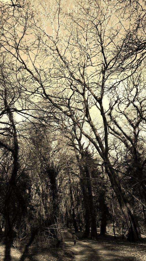 Foresta del cane colly fotografia stock