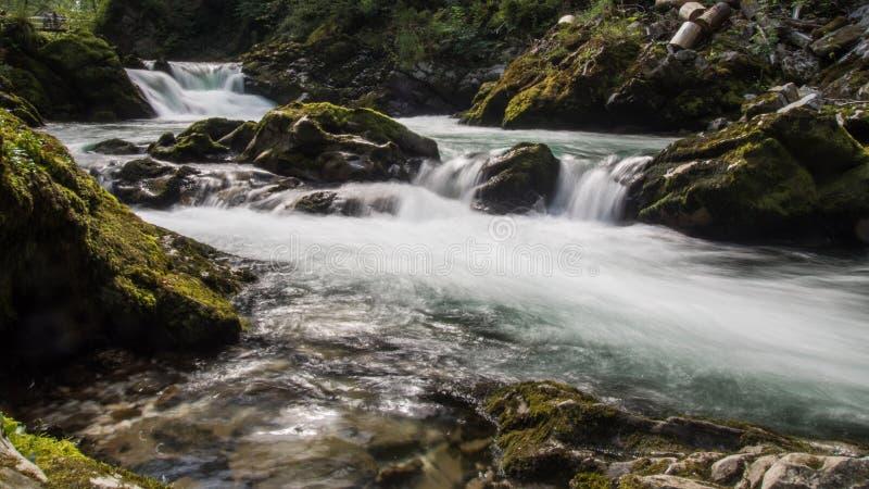 Foresta del canyon con la NATURA della cascata immagini stock libere da diritti