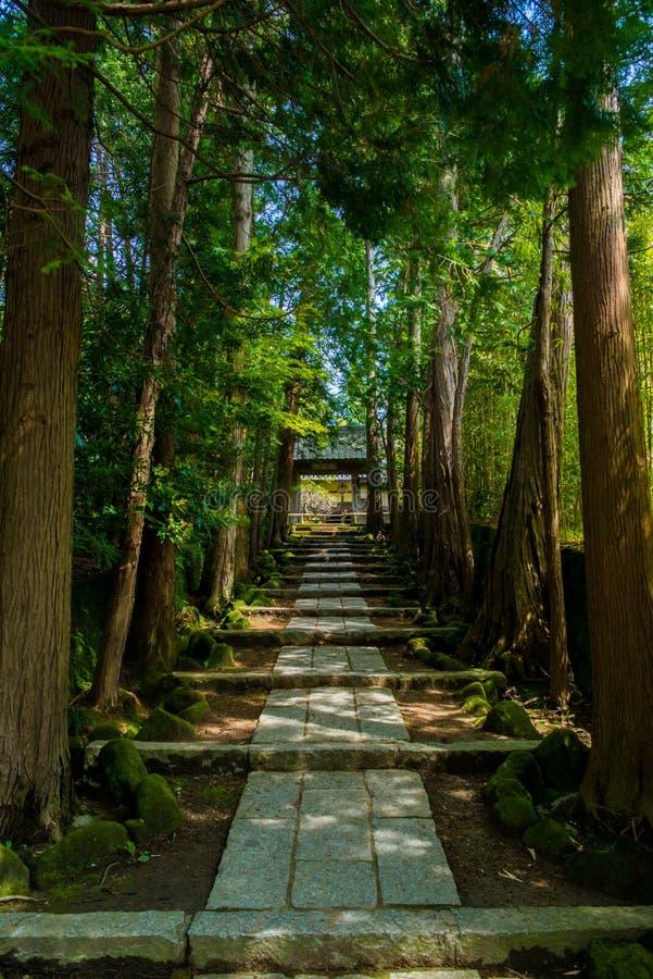 Foresta del cedro fotografia stock