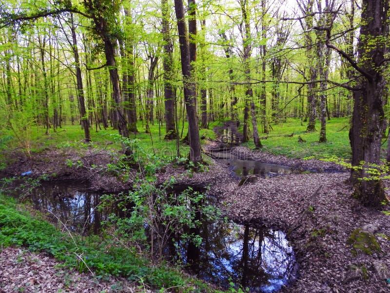 Foresta del cielo dell'erba della fogna di legni fotografia stock libera da diritti