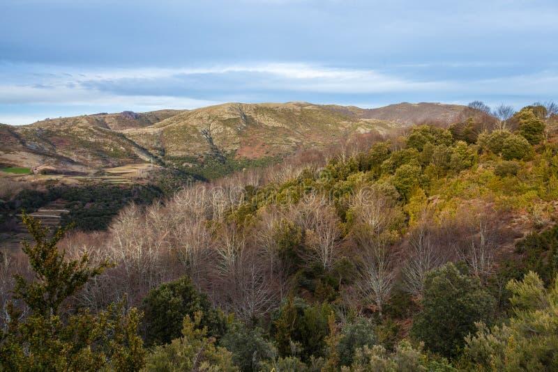 Foresta del faggio che cambia ai colori di primavera immagini stock libere da diritti