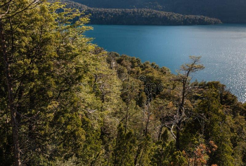 Foresta del faggio del sud intorno al lago Mascardi immagine stock libera da diritti
