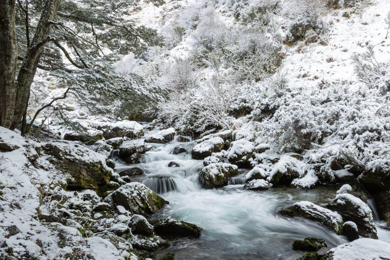 Foresta del faggio e della cascata in neve fotografia stock