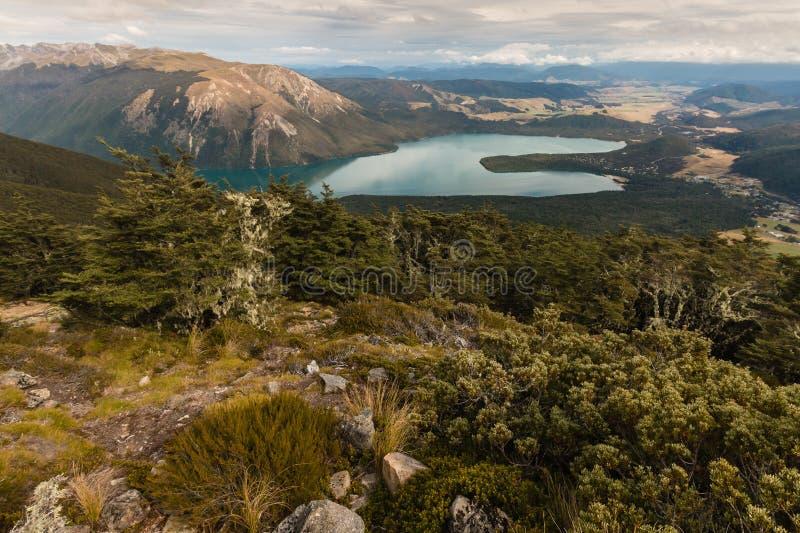 Foresta del faggio sopra il lago Rotoiti in Nelson Lakes National Park immagine stock libera da diritti