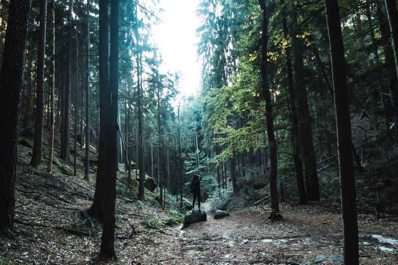 Foresta del faggio sul pendio di montagna all'alba dopo gli alcuni piovosità settimanale immagine stock libera da diritti