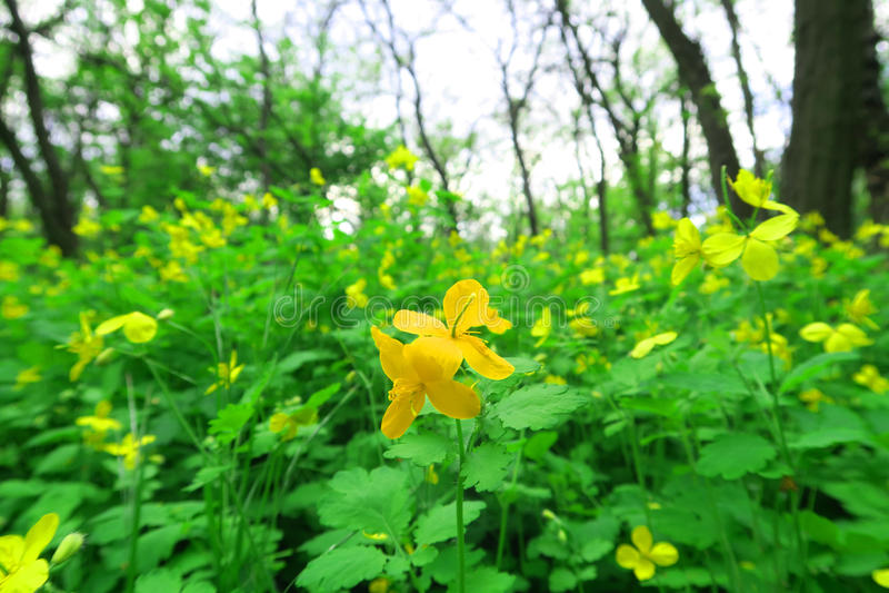 Foresta del fiore fotografia stock
