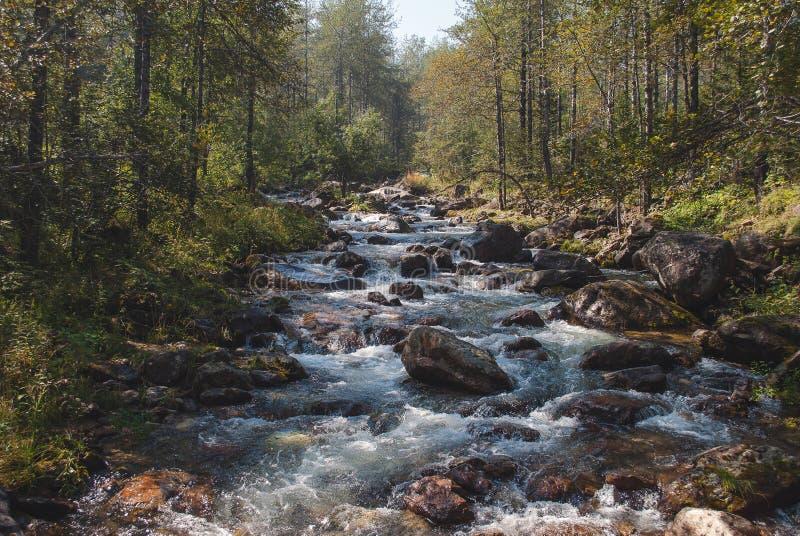 Foresta del fiume della montagna fotografia stock libera da diritti