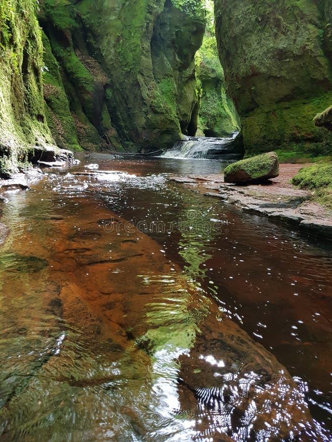 Foresta del fiume della natura fotografia stock
