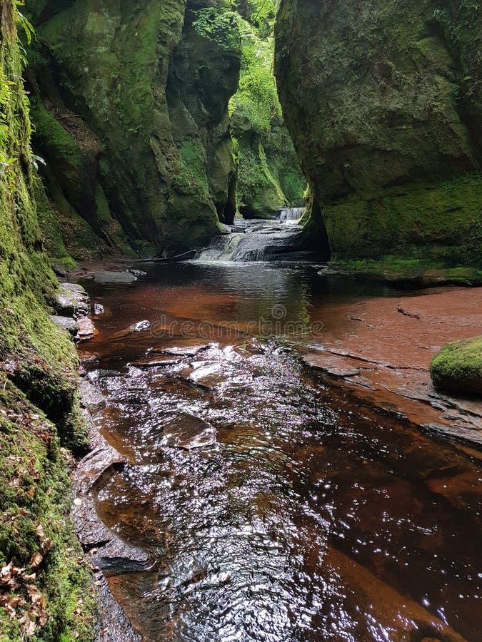 Foresta del fiume della natura fotografia stock libera da diritti