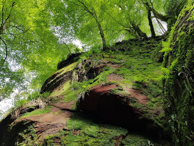 Foresta del fiume della natura immagine stock