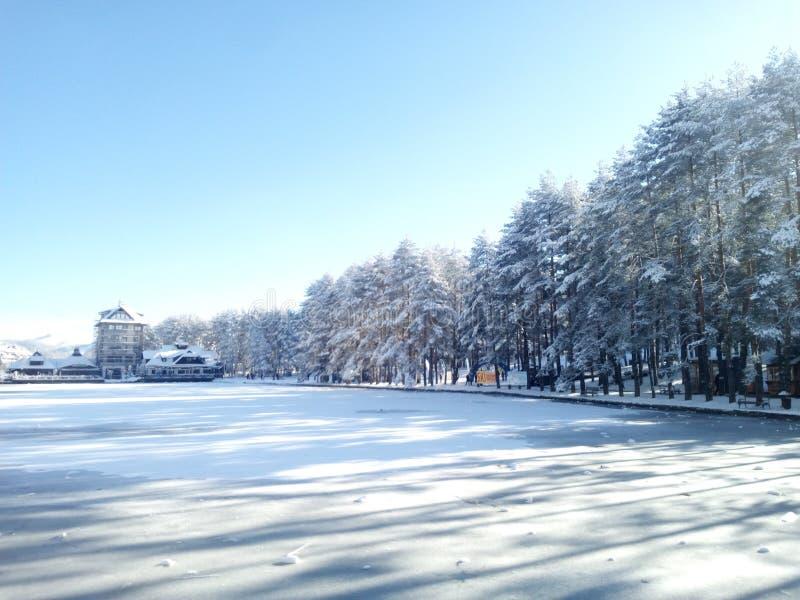 Foresta del ghiaccio della neve di inverno delle montagne immagine stock libera da diritti