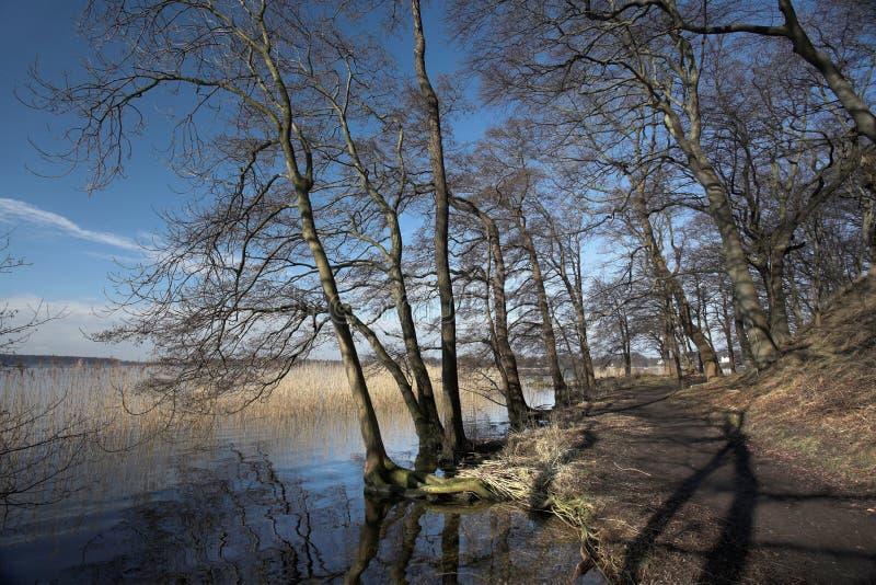 Foresta del lago immagine stock