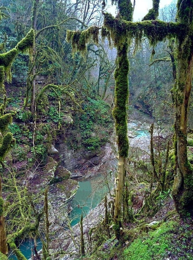 Foresta del legno di bosso fotografia stock libera da diritti