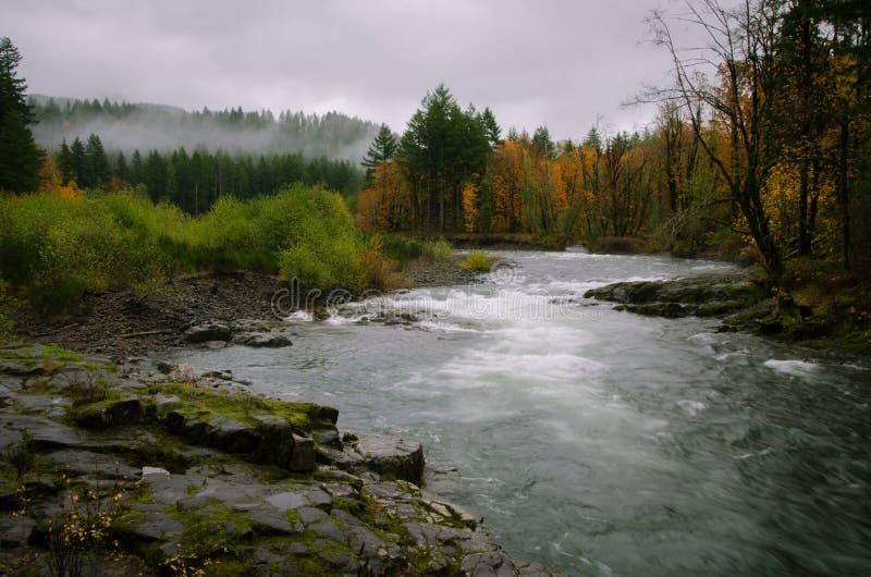 Foresta del Tillamook fotografia stock