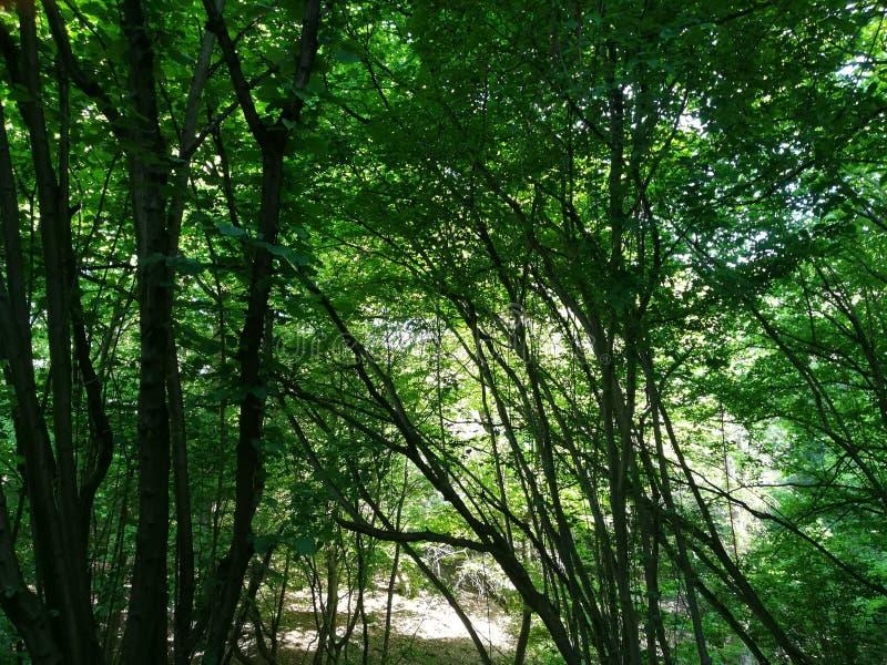 Foresta dell'albero della natura fotografia stock
