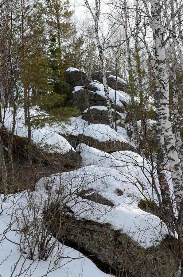 Foresta dell'Altai fotografia stock