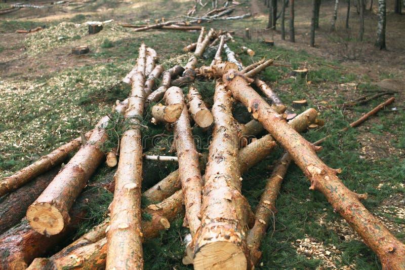 Foresta dell'ambiente, della natura e di disboscamento - alberi di abbattimento immagini stock
