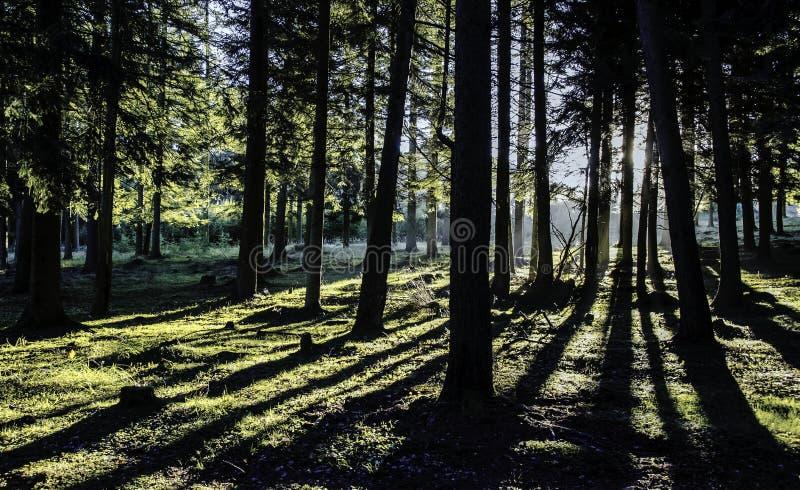 Foresta dell'ombra fotografia stock