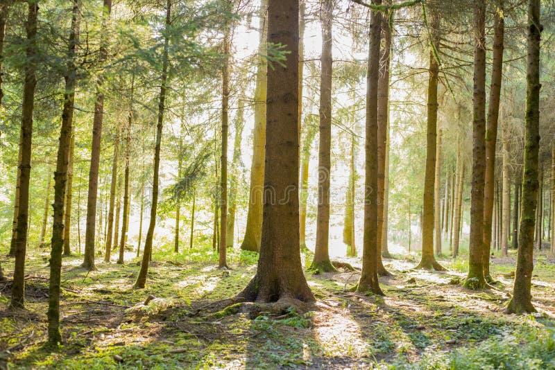 Foresta dell'ombra immagini stock libere da diritti