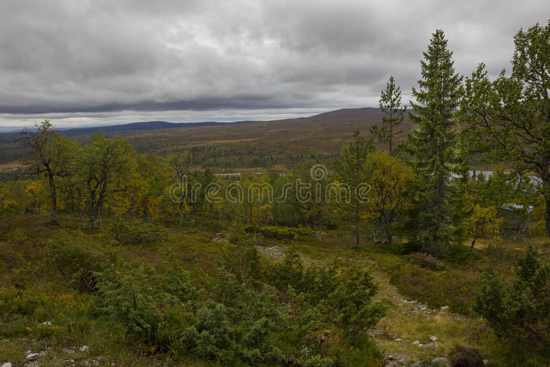 Foresta della betulla con il lago fotografie stock