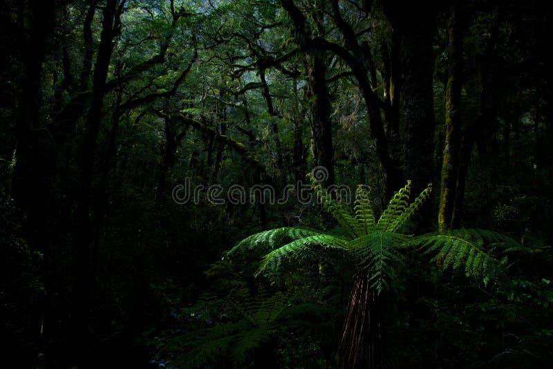 Foresta della felce in Milford Sound immagine stock