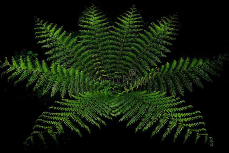 Foresta della felce in Milford Sound fotografie stock libere da diritti